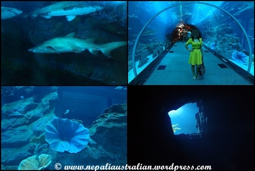 The Dubai Mall, aquarium and underwater zoo | nepaliaustralian