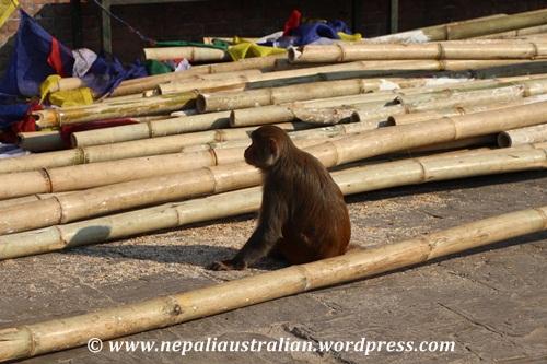 Swayambhu (28)