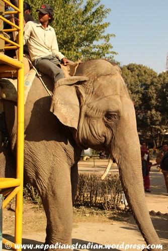 Kathmandu zoo (13)