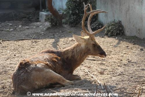 Kathmandu zoo (5)