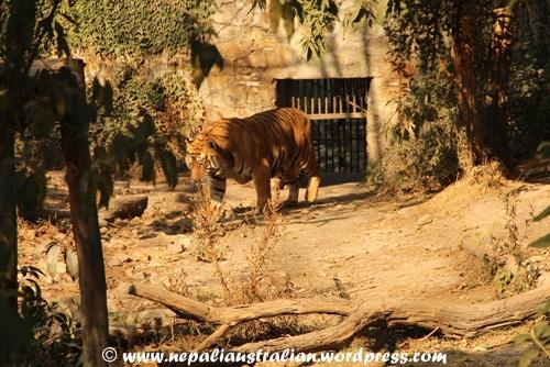 Kathmandu zoo (9)