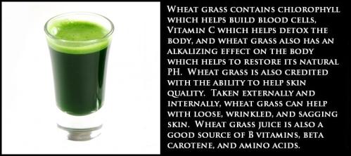 wheatgrass (6)