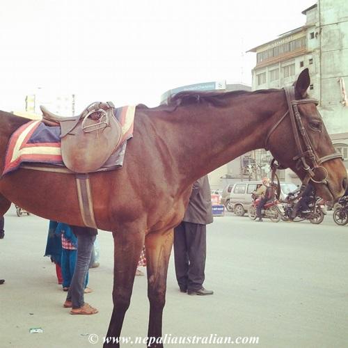 Nepal (11)