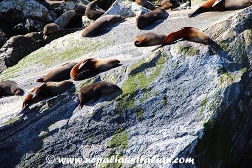 Milford Sound (2)