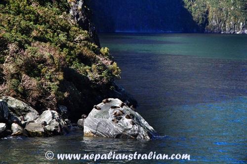Milford Sound (21)