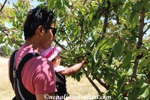 Cherry picking (1)