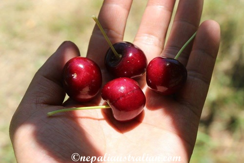 Cherry picking (2)
