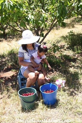Cherry picking (4)