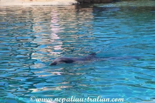 sea world (7)