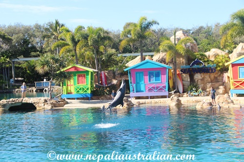 sea world (8)