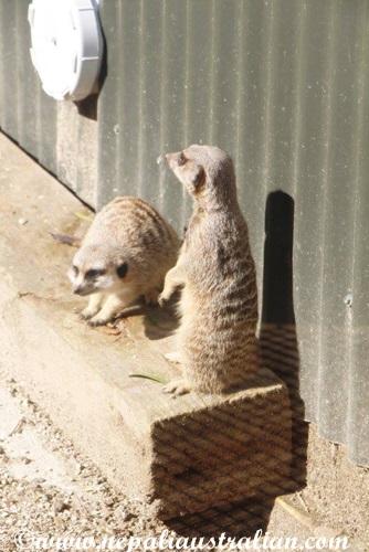 hamilton zoo (11)