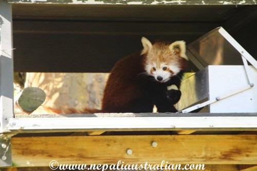 hamilton zoo (14)
