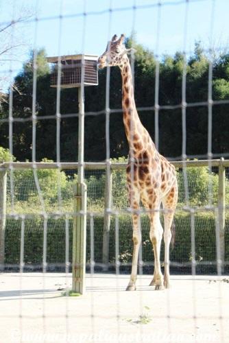 hamilton zoo (15)