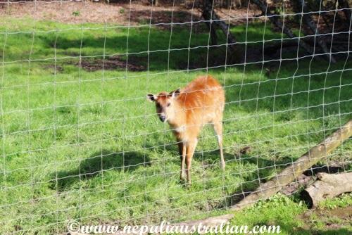 hamilton zoo (16)