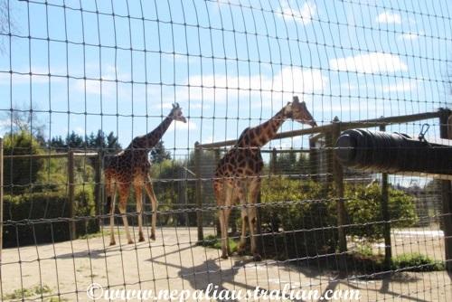 hamilton zoo (22)