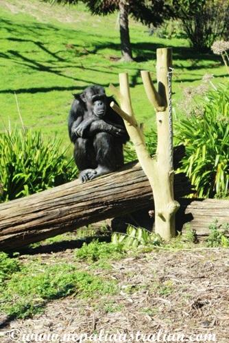 hamilton zoo (24)