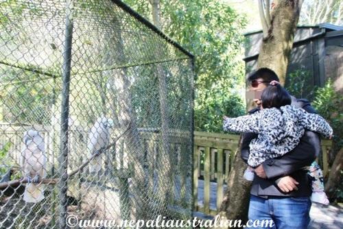 hamilton zoo (25)