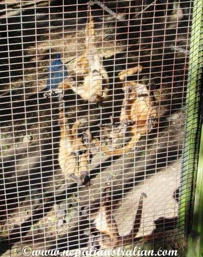 hamilton zoo (26)