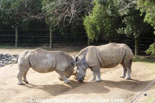 hamilton zoo (3)