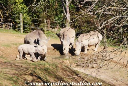 hamilton zoo (4)