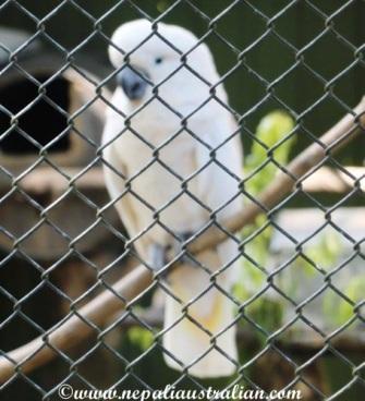 hamilton zoo (9)