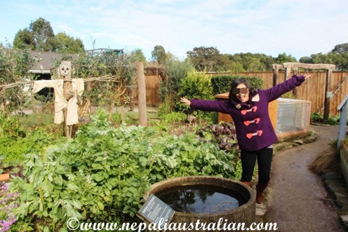 herb-garden-2