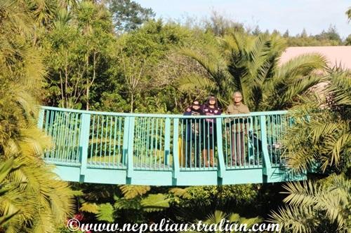 tropical-garden